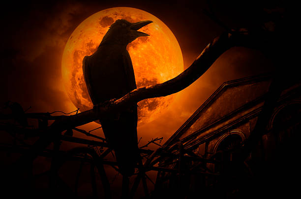 crow sit on dead tree trunk and croak, halloween concept - croak stock pictures, royalty-free photos & images