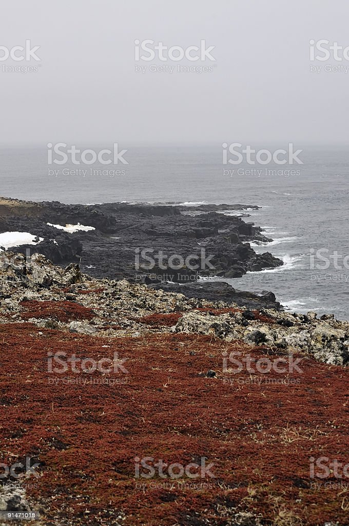 Crowberry And Lava Beach stock photo