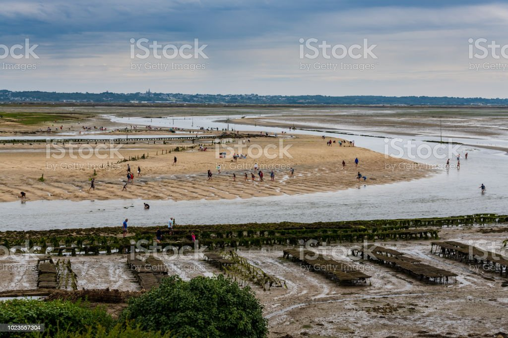crowd of people harvesting shells at low tide in front of Guerande in the morning in the Traict stock photo