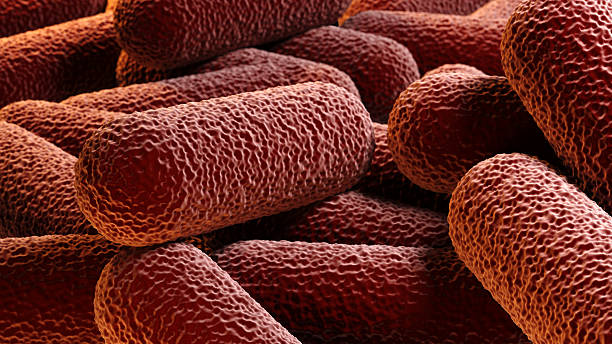 Crowd of rod-shaped bacteria stock photo