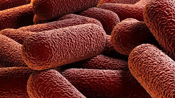 folla di batterio a forma di bastoncello - micrografia elettronica a scansione foto e immagini stock