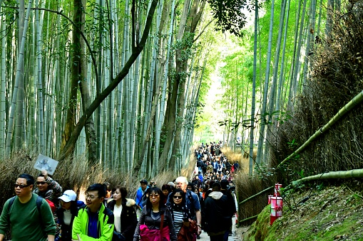 Crowded Alley of Bamboo Grove in Sagano, Kyoto