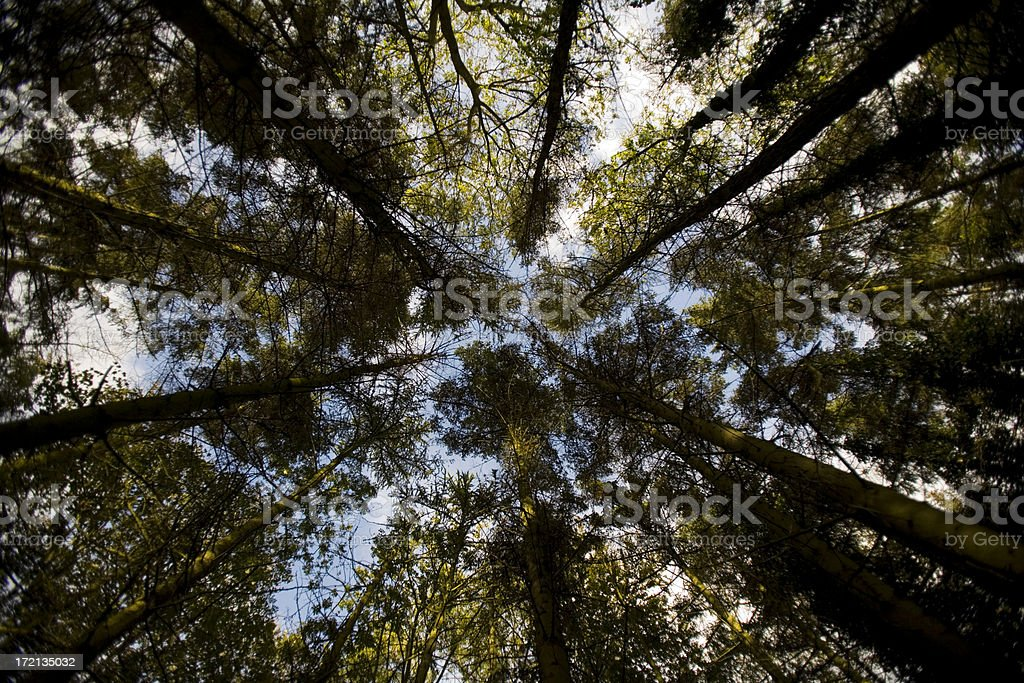 crowded forest royalty-free stock photo