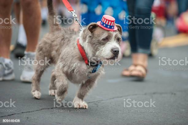 Crowded walking space for adorable parade dog in costume picture id809446408?b=1&k=6&m=809446408&s=612x612&h=w8wna1sezlyw2tc20nz apj5xrdyvfvrfnxqmo6iwr8=