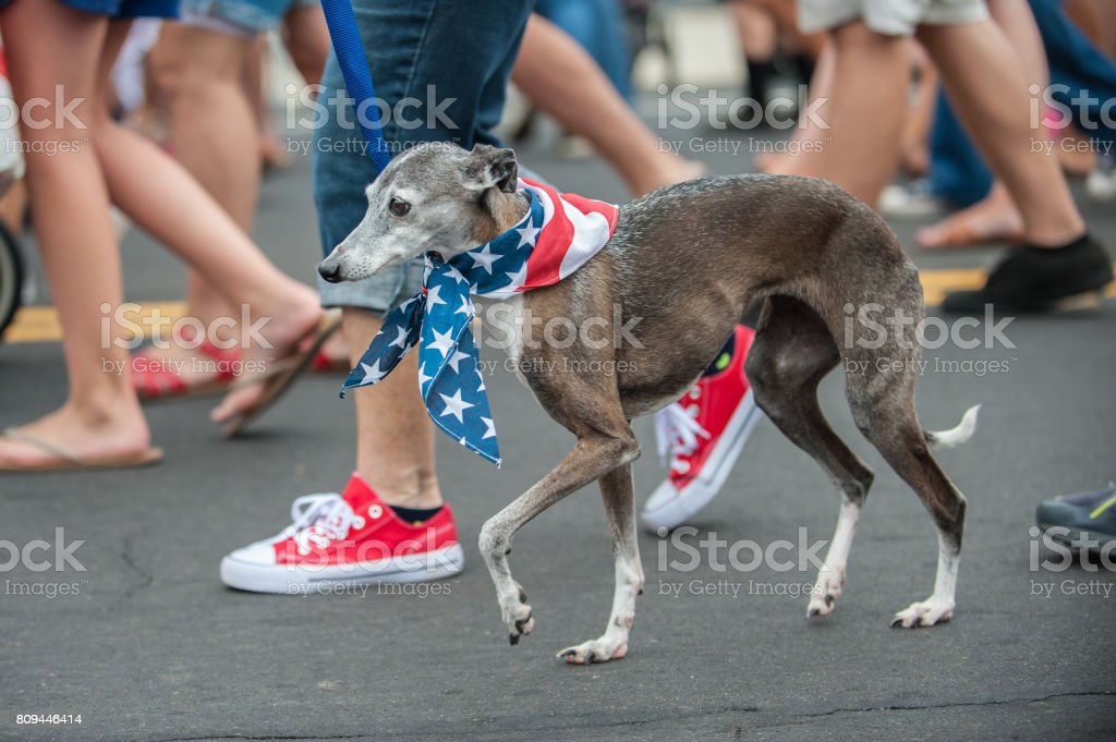 Crowded walking space for adorable parade dog in costume stock photo