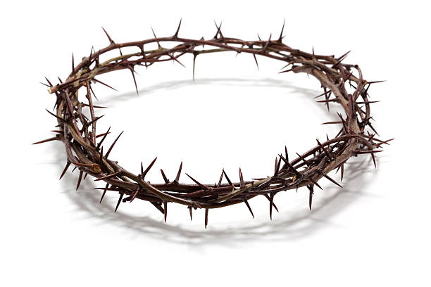 crown of thorns - sharp stock photos and pictures