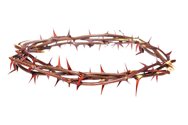 crown of thorns - thorn stock photos and pictures