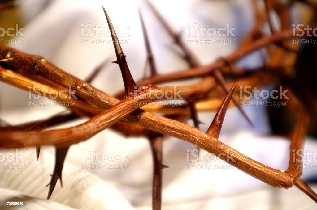 Coroa de espinhos - foto de acervo