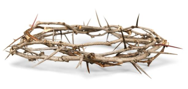 Crown of thorns. Crown of Thorns thorn stock pictures, royalty-free photos & images