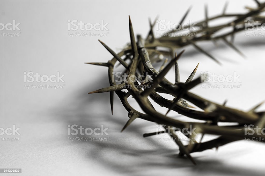 Crown of thorns similar to those forced upon  Christ- sepia stock photo