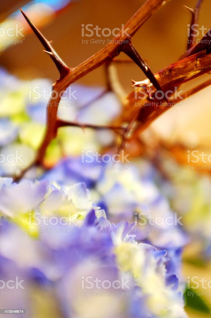 Coroa de espinhos com flores de Hortênsia - foto de acervo