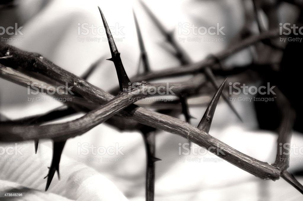 Crown of Thorns--black and white stock photo