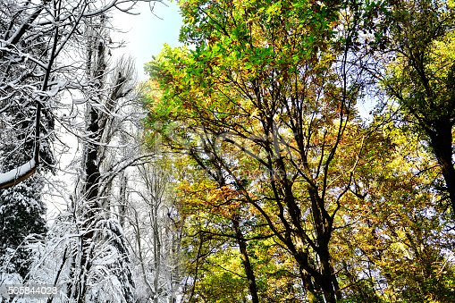 istock crowns of trees in two seasons 505844028