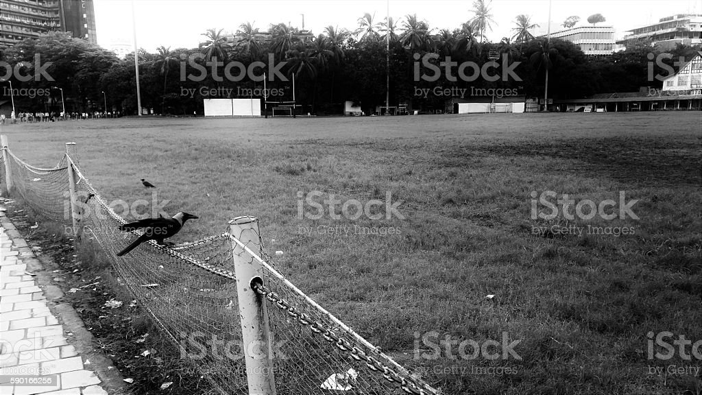 Crows on field Black and white morning shot of two crows (House crows)- one on field (Azad Maidan) and the other sitting on the netted boundary and positioning itself to fly. Garbage littered under the crow on the edges of the ground. Bombay Gymkhana building in the background to the right and the crowd walking on pavement to the left. Agricultural Field Stock Photo