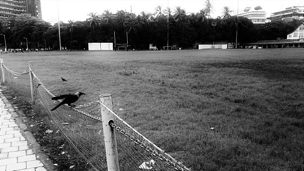 Crows on field stock photo