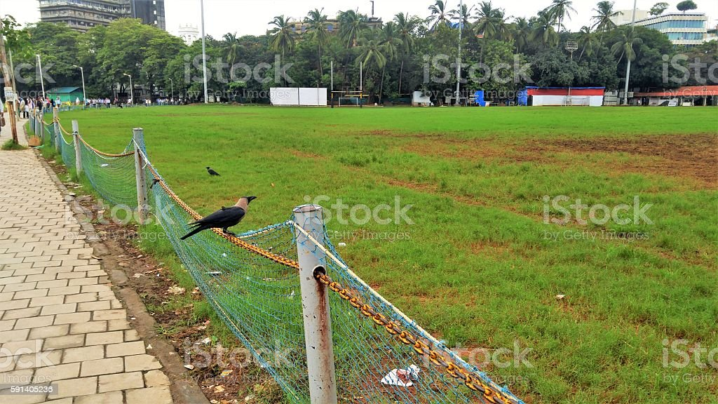 Crows on field morning shot of two crows (House crows)- one on field (Azad Maidan) and the other sitting on the netted boundary. Garbage littered under the crow on the edges of the ground. Bombay Gymkhana building in the background to the right and the crowd walking on pavement to the left. Agricultural Field Stock Photo
