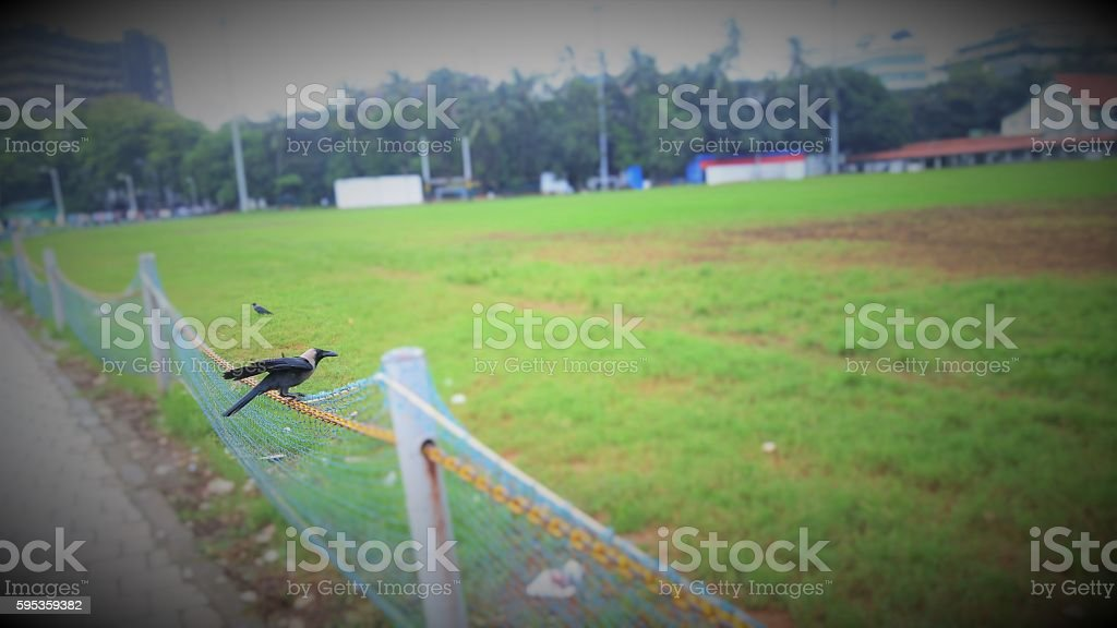 Crows on field morning shot of two crows  Agricultural Field Stock Photo