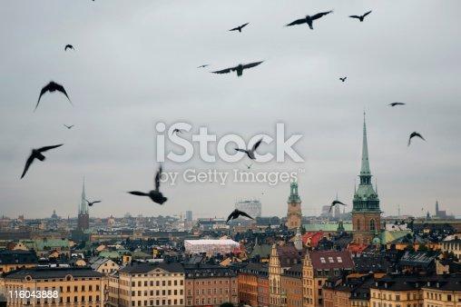 swarm of crows over grey Stockholm