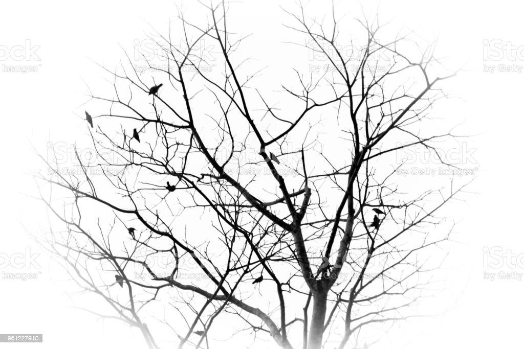 Crows – Foto