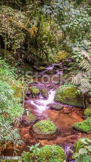 Córrego no meio da floresta, durante trilha. Monte Verde Minas Gerais - Brasil 04/2015