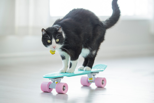 Quirky scene of cute black and white domestic cat riding a pink and teal skateboard indoors in a bright white room in front of a window.