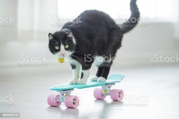Cruising cat picture id685958232?b=1&k=6&m=685958232&s=612x612&h=xeyd roxad 3trutdpb2jzkowi 1srft3mlhcyljvjs=