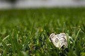 istock Crumpled USDollar Bill on Grass 171295978