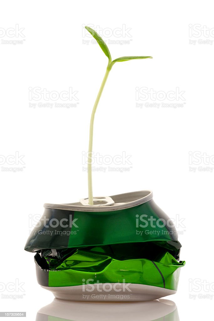 Crushed can with sprout growing out of spout  royalty-free stock photo