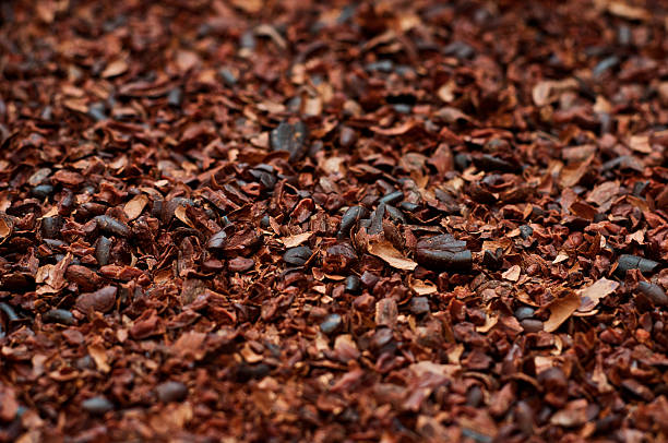 Crushed, roasted cocoa beans with husk stock photo