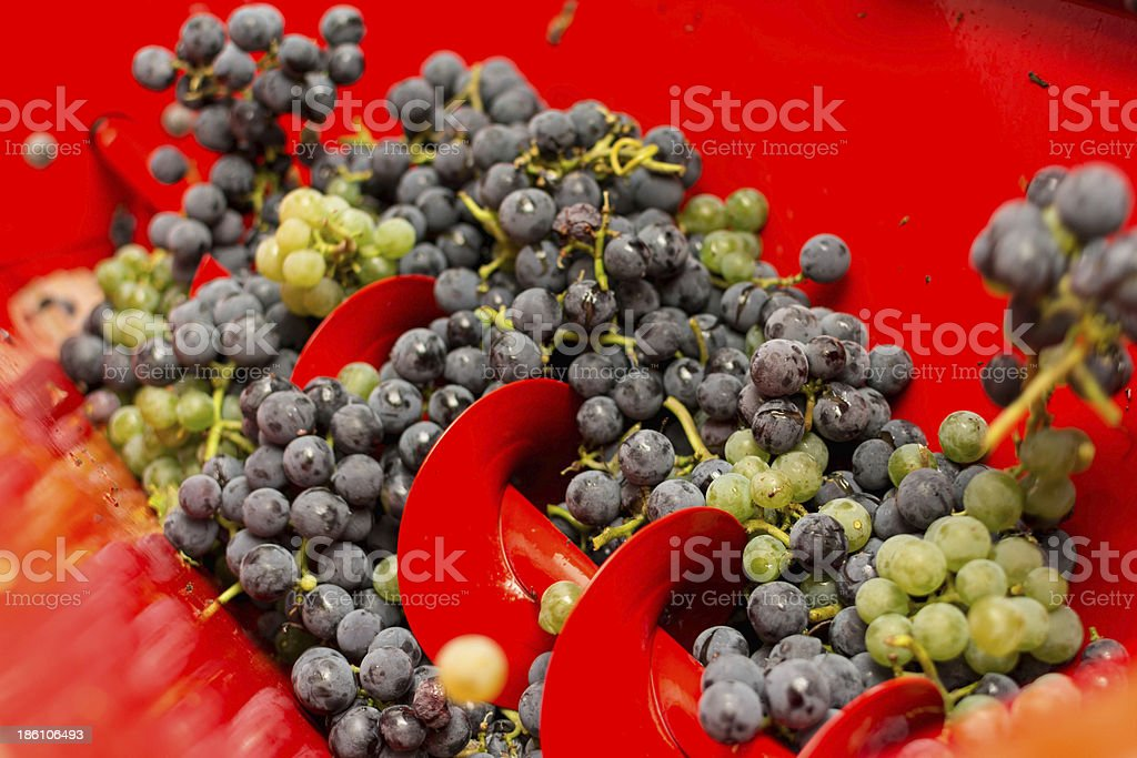 Crushing grapes stock photo