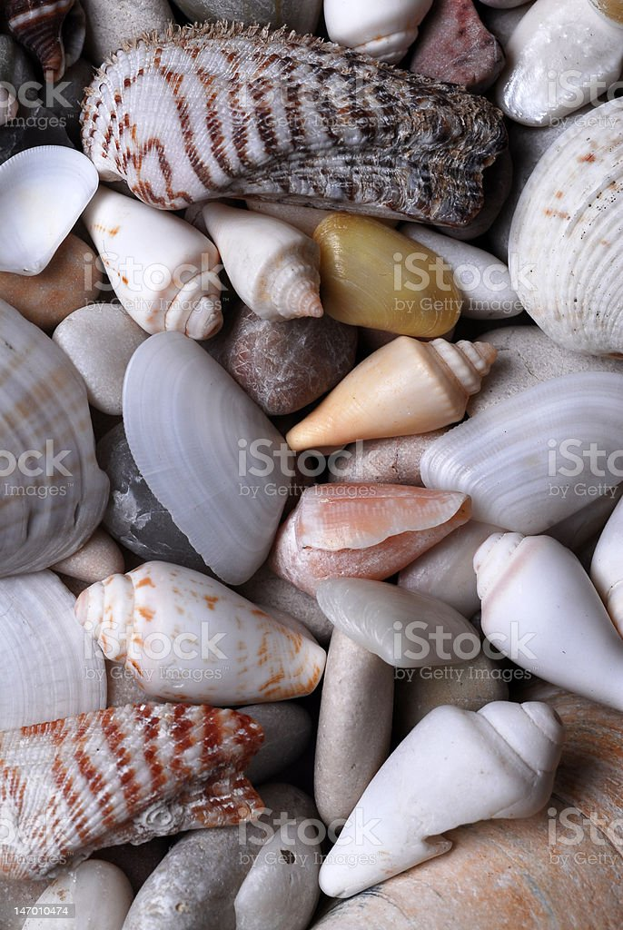 Crustaceans stock photo