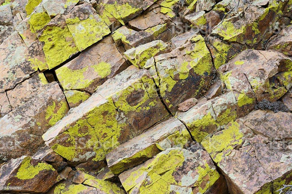 Crustose lichens on the rocks stock photo