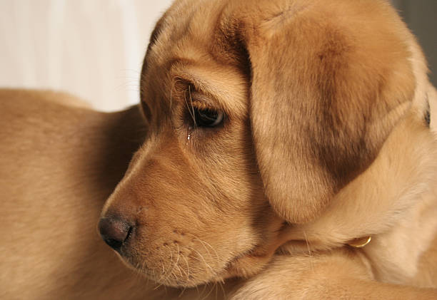 Royalty Free Crying Dog Pictures Images And Stock Photos Istock