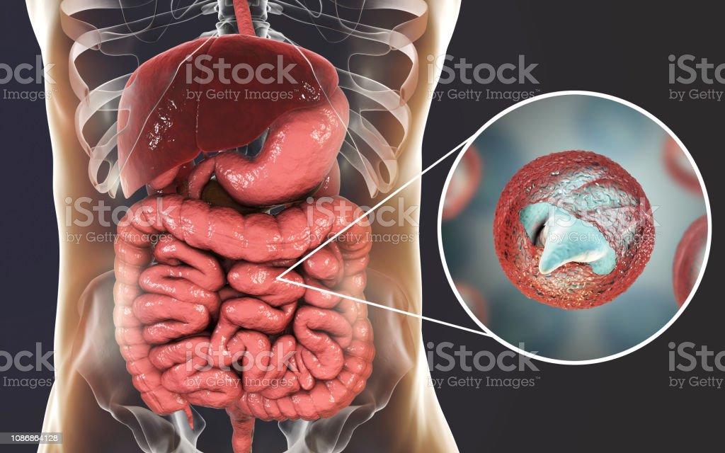 Cryptosporidiosis, a diarrheal disease caused by Cryptosporidium parvum protozoan stock photo