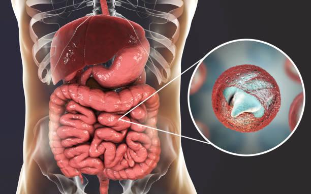 cryptosporidiose, een diarree ziekte veroorzaakt door cryptosporidium parvum protozoan - parasitisch stockfoto's en -beelden