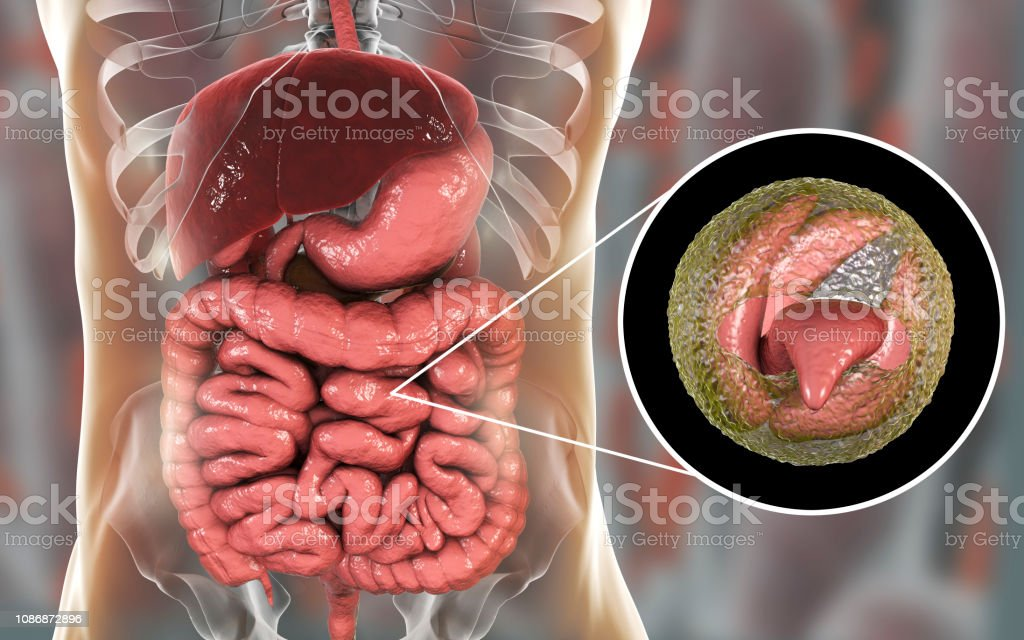Cryptosporidiosis, a diarrheal disease caused by Cryptosporidium parvum protozoan stock photo
