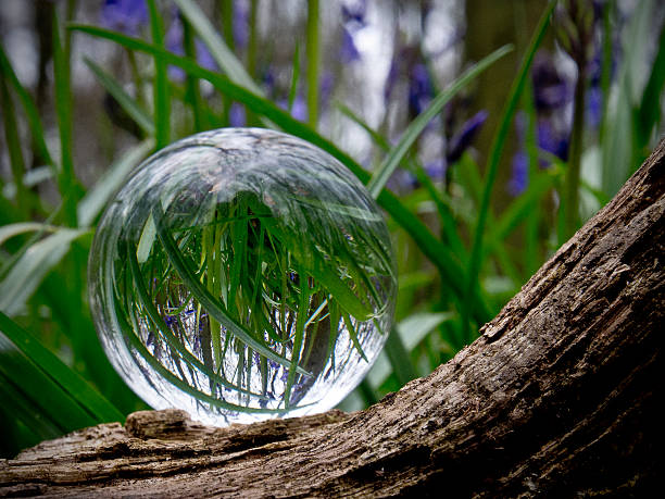 Crystal Ball in Bluebell Woods stock photo