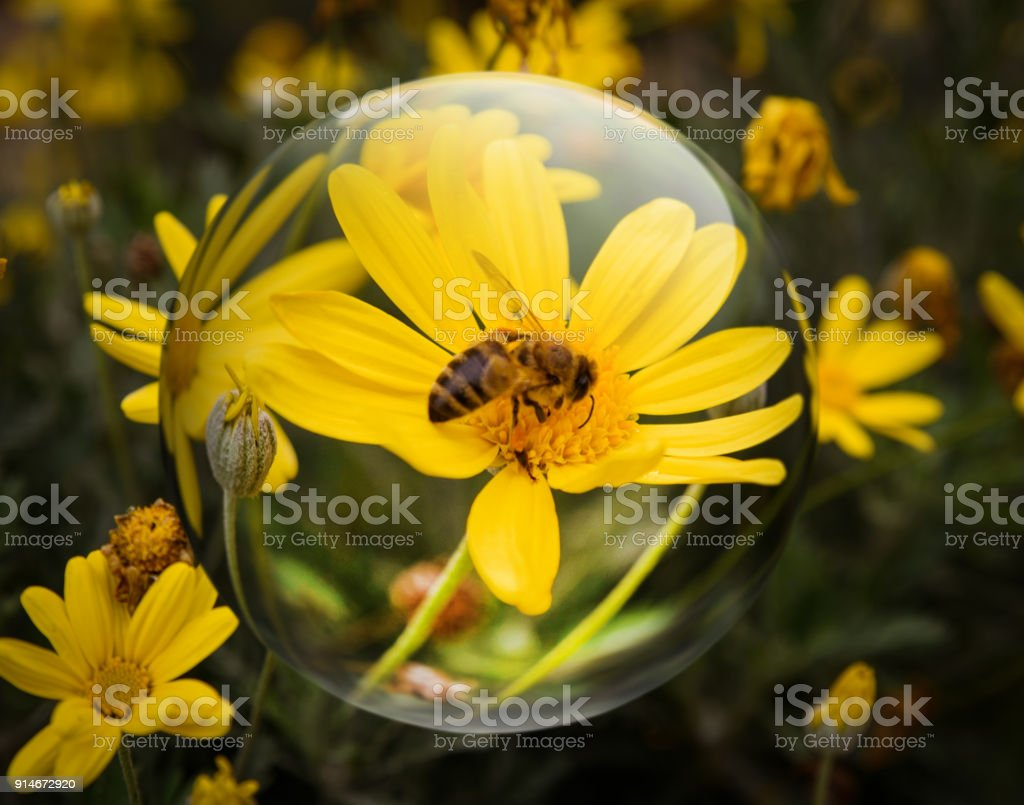 Crystal Ball Reflecting Bee On Yellow Flower Stock Photo More