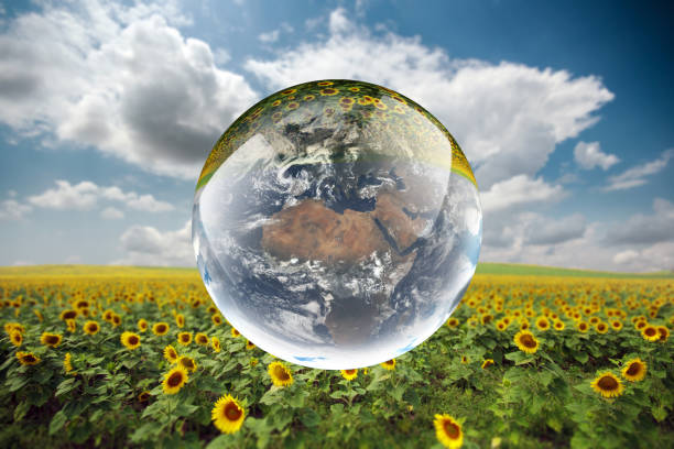 Crystal ball reflecting globe of the earth in sunflower field stock photo