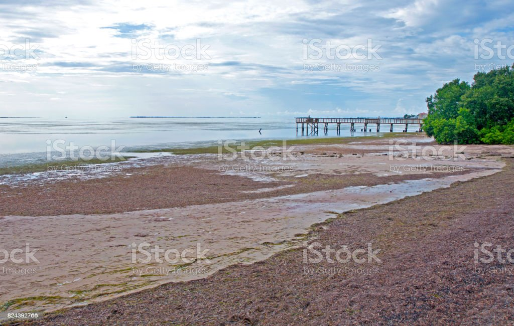 Crystal Beach Low Tide Stock Photo   More Pictures of Abandoned  2299f876e