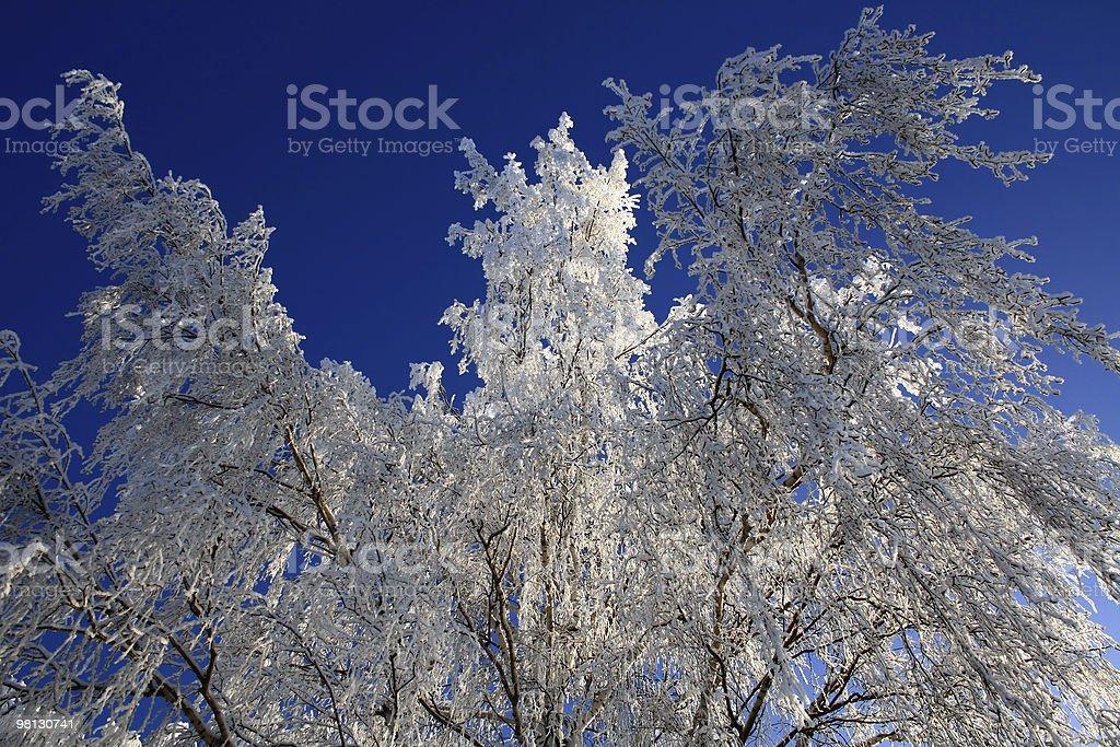 Crystal birch royalty-free stock photo