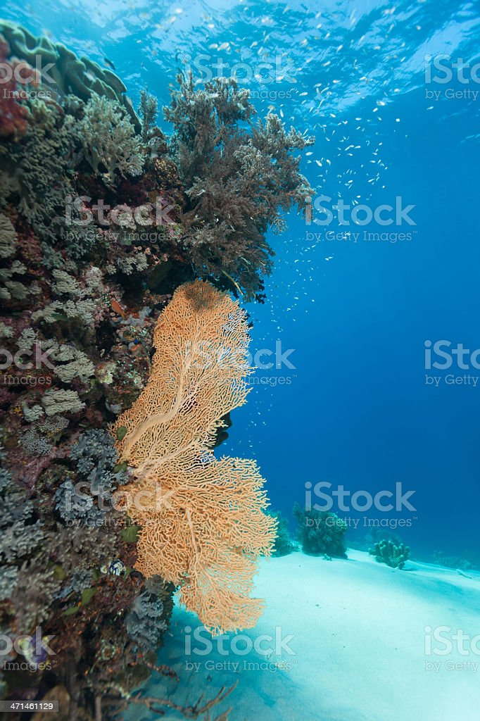 Crystal Clear Underwater Scenery, Gili Lawa Darat, Komodo Nationalpark, Indonesia stock photo