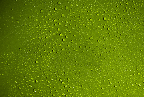 Crystal Clear Water Drops Over Green Background Stock Photo - Download Image Now