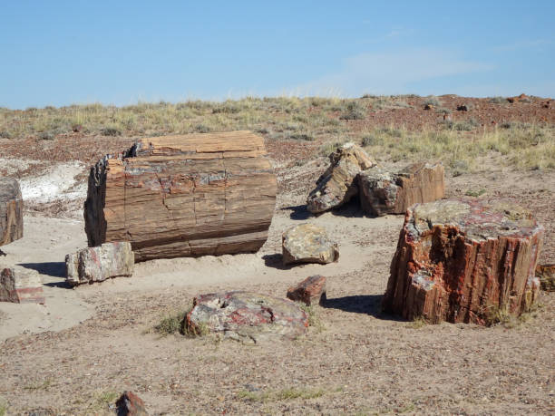 Crystal Forest Petrified Wood stock photo