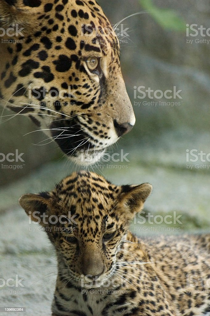 Cub and Mother royalty-free stock photo
