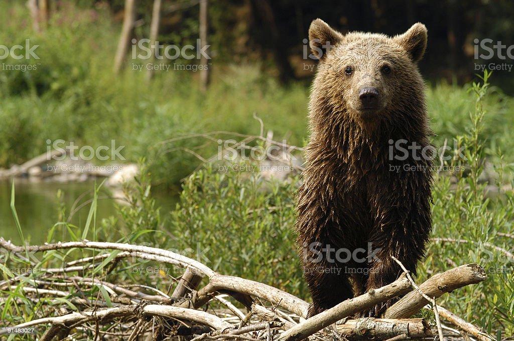 Cub stock photo