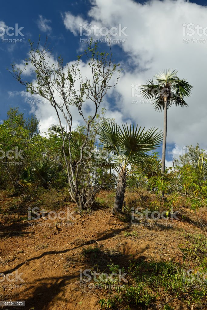 Cuba Pico Turquino trail stock photo