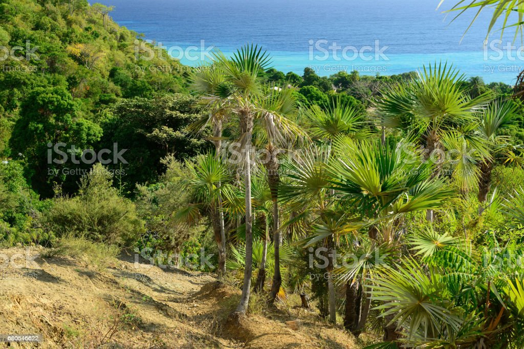 Cuba Pico Turquino trekking stock photo