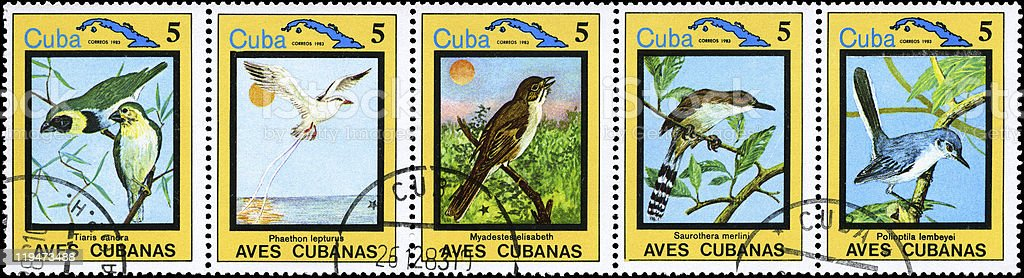 Cuban Birds stock photo