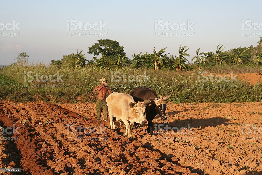 Cuban farm powered by human and animal forces royalty-free stock photo